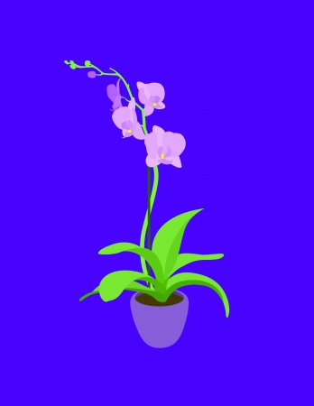 pink orchid: Elegant pink orchid isolated on a purple background