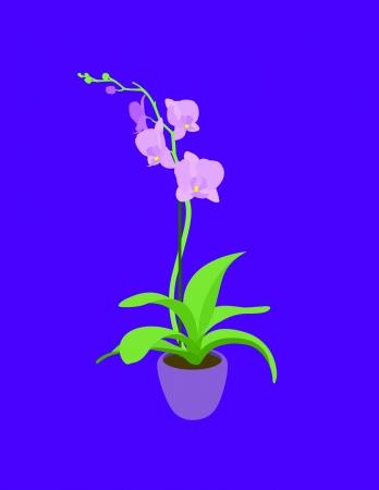 kompost: Vornehme rosa Orchidee isoliert auf einem lila Hintergrund
