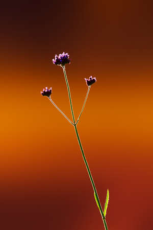Simplicity in nature. Single flower on a smooth background