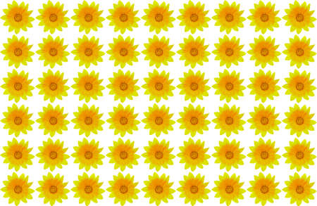 Yellow flower background on white. Seamless, Gazania rigens Zdjęcie Seryjne