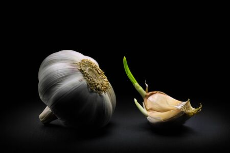 Fresh garlic with one clove on a black dramatic background. Zdjęcie Seryjne