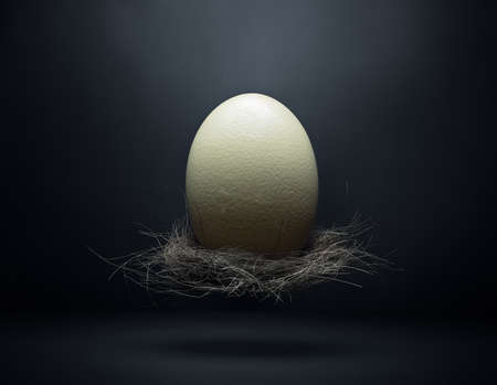 Ostrich egg in a nest floating in the air photographed in studio with a dark moody environment, fine art. Stock Zdjęcie Seryjne