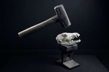 Caught between the hammer and the anvil. Showing the heavy killing impact humans have on nature. Stock Zdjęcie Seryjne