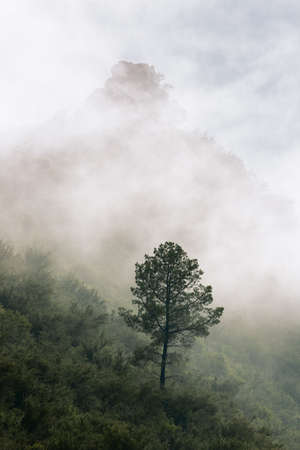 Misty early morning vertical landscape with a single tree on a mountain and lots of fog rolling in. South Africa.