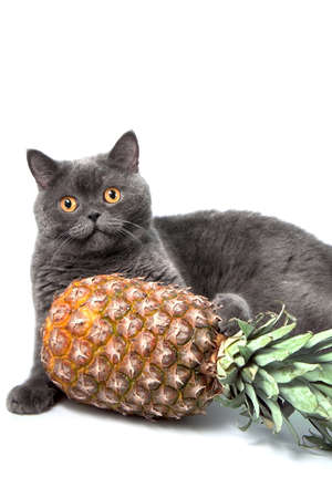 cat with pineapple on white background