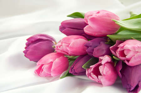 Pink and violet tulips on white silk