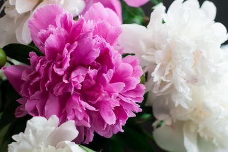 pfingstrosen: weiß und rosa Pfingstrosen auf rustikalem Holzuntergrund