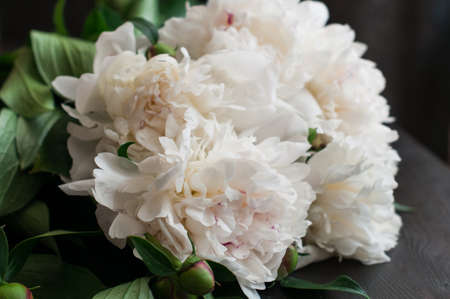 peonies: fresh white peonies on rustic wooden background