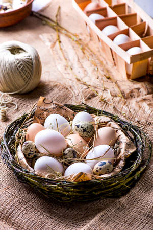 quail nest: quail and brown eggs in a nest Stock Photo