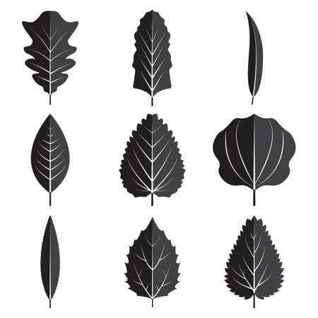 Black leaves Vector illustration  isolated on plain background
