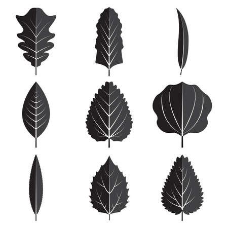 Black leaves Vector illustration  isolated on plain background