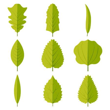 Green leaves set vector icon design illustration.