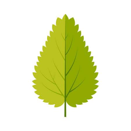 Nettle leaf icon vector design illustration.