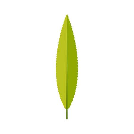 Willow leaf icon vector design illustration.