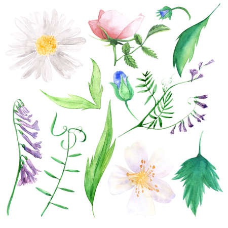wild flowers: wild flowers