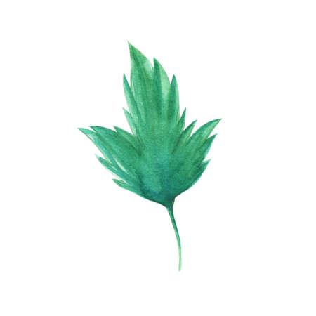 botanics: leaf Stock Photo