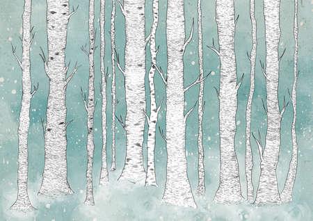birch forest: Birch Forest Stock Photo