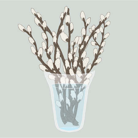Pussy willow branches bouquet in a vase, vector illustration