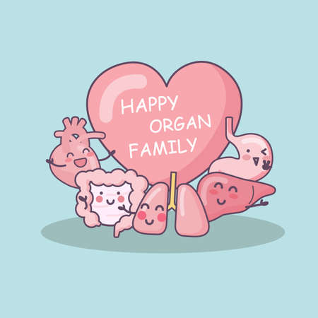 bowel surgery: Happy organ family - heart, lung, liver, stomach and intestine cartoon, great for health care concept