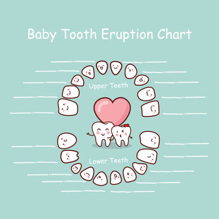 incisor: Baby tooth chart eruption record, great for health dental care concept