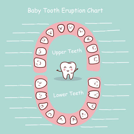 baby tooth: Baby tooth chart eruption record, great for health dental care concept