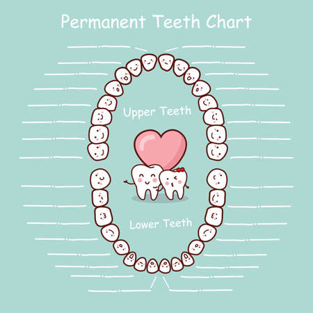 permanent: Permanent tooth chart record, great for health dental care concept