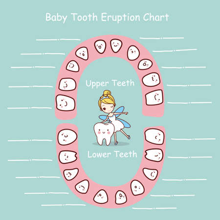 baby tooth: cartoon Baby tooth chart eruption record, great for health dental care concept