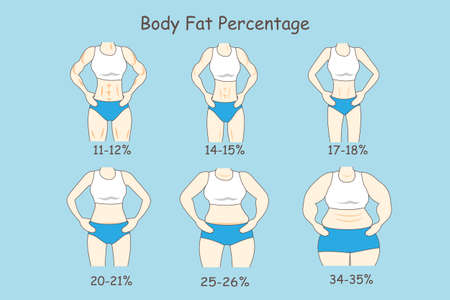 oversize: Cartoon woman represent body fat percentage, great for health care concept
