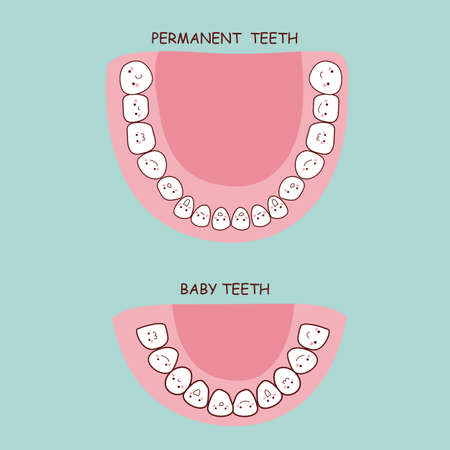 permanent: permanent teeth and baby teeth,  great for health dental care concept