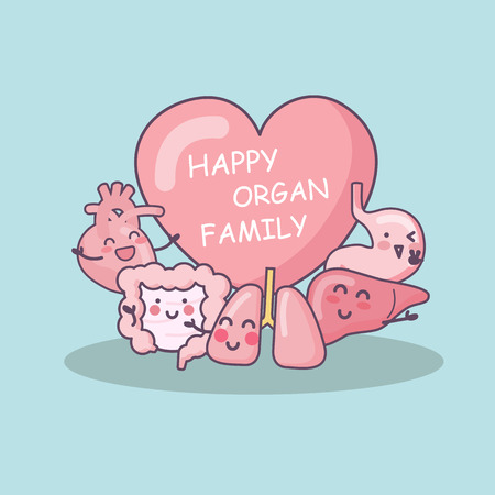 bowel: Happy organ family - heart, lung, liver, stomach and intestine cartoon, great for health care concept