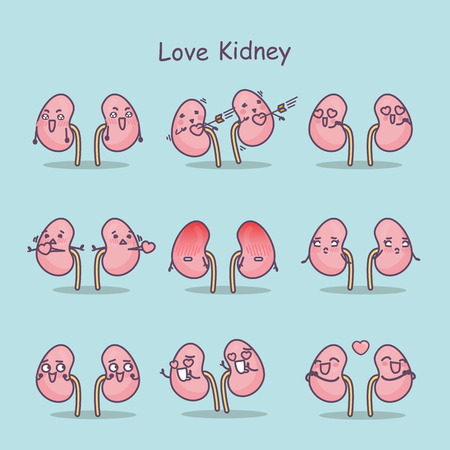 love cartoon kidney,great for your concept Illustration