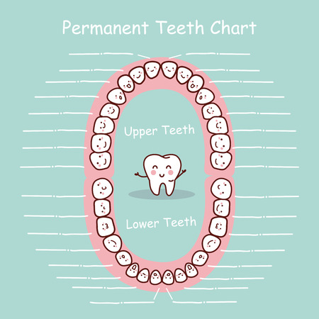 eruption: Permanent tooth chart record, great for health dental care concept