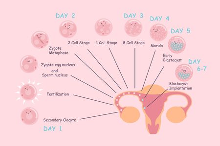 cartoon ovum and sperm and pregnancy process, great for Pregnancy Concept