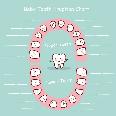 Baby tooth chart eruption record, great for health dental care concept