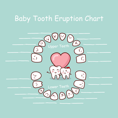 Baby tooth chart eruption record, great for health dental care concept Vector Illustration
