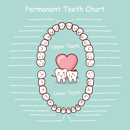 Permanent tooth chart record, great for health dental care concept