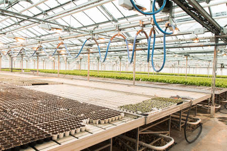 Green House and green vegetable. Young plants growing in a very large nursery Фото со стока