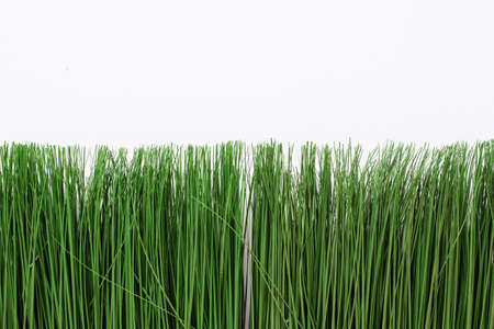 green artificial grass on a white background. Thin grass in a bright rectangular pot. Banco de Imagens
