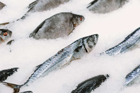 Frozen fish in ice in a supermarket. Close up.