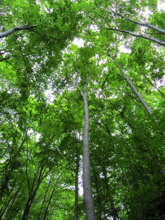 verticals: Downview of the interior of a green forestwith high trees