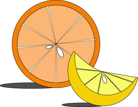 Illustration of citrus slices Vector