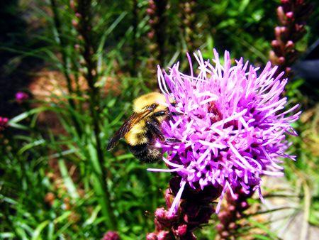 Bee sucking on a flower Фото со стока