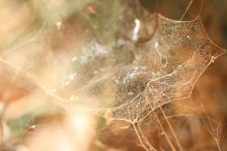 s trap: Spider s web