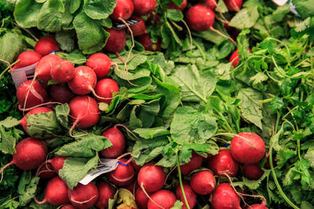 Red Radishes in a group