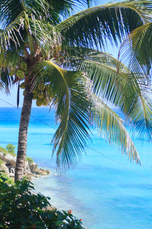 Palm tree in beautiful mexico photo
