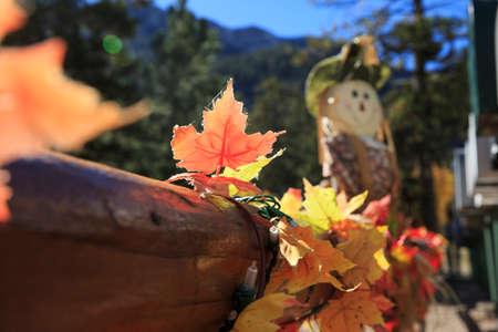 Halloween scarecrow and orange Leaves Stok Fotoğraf