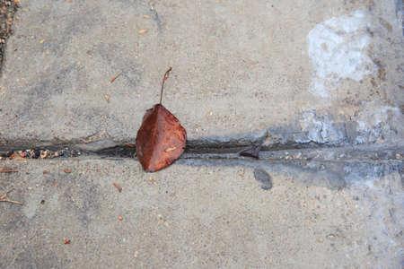 One autumn leaf on the asphalt Imagens
