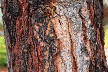 Texture on the tree Stock Photo