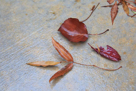 Brown wet leaves on the asphalt