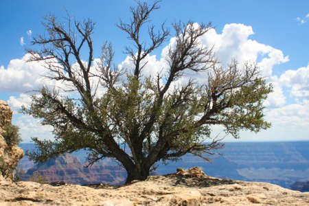 holiday maker: Tree in Grand Canyon National Park Stock Photo